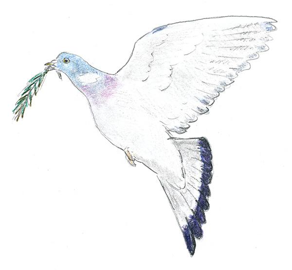 Vredesduif